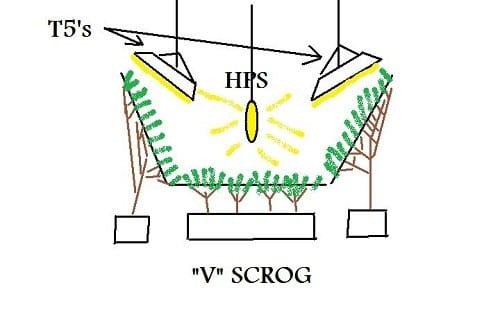תרשים גידול חצי ורטיקלי - סקרוג