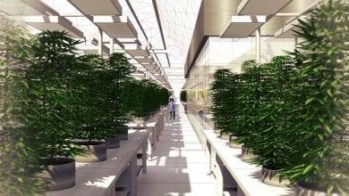 Photo of חדש בקולורדו: מרכז גידול קנאביס פתוח למבקרים