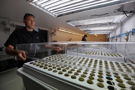 מעבדה חדישה לגידול שתילי מריחואנה
