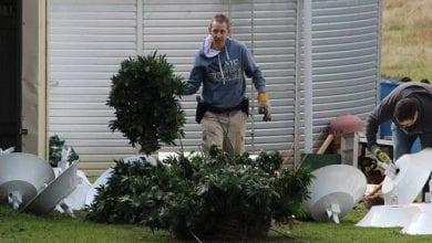 Photo of גידול קנאביס: 10 טעויות של מגדלים מתחילים