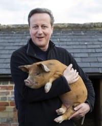 דייויד קמרון מחבק חזיר