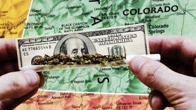Photo of קנאביס הכניס לקולורדו יותר מיסים מאלכוהול – התושבים מקבלים כסף בחזרה
