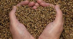 Hemp seeds help decrease blood pressure