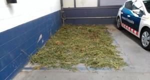 מריחואנה מוחרמת מסריחה תחנת משטרה ספרד