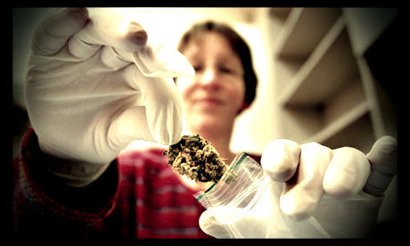 פרח קנאביס רפואי בתוך שקית