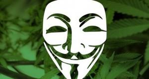 הסמל של ארגון 'אנונימוס' על גבי רקע של עלי קנאביס