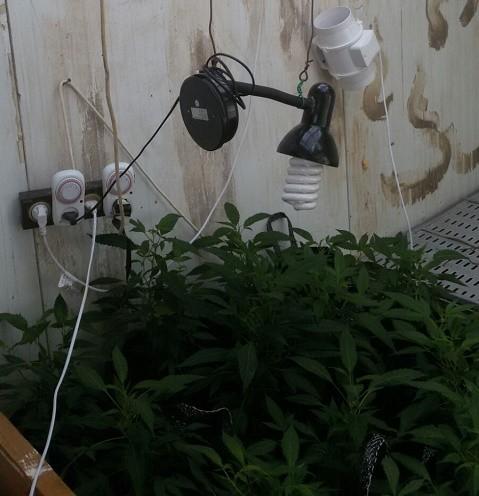 ציוד גידול שנתפס בדירה ברותם - מנורות, כלים וכבלי חשמל.