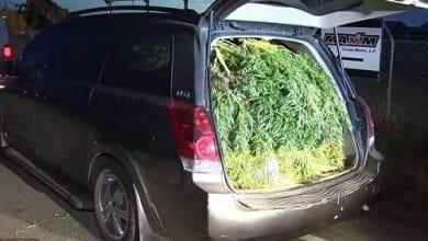 Photo of שוטרים עצרו רכב לבדיקה ומצאו 45 קילוגרם מריחואנה בבגאז'