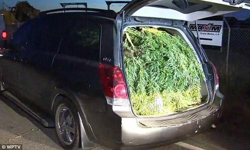 קליפורניה: 45 קילוגרמים של מריחואנה נתפסו ברכב פרטי