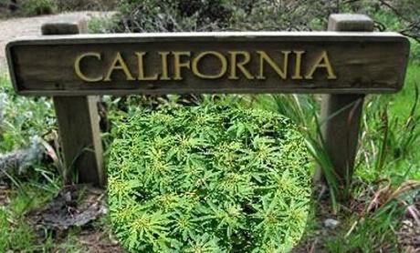 קנאביס במדינת קליפורניה