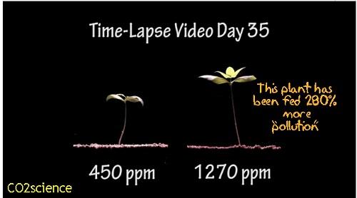 הדמיה להבדלים בקצב הצמיחה בריכוזי CO2 שונים