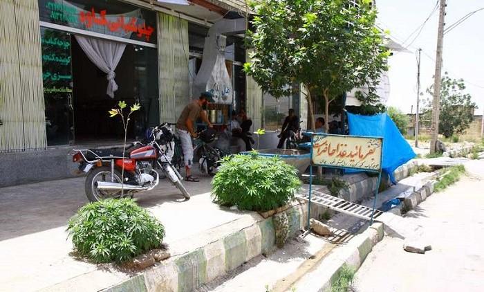 צמחי קנאביס ברחוב איראני