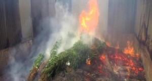 קנאביס בשווי 8 מיליון דולר, נשרף על ידי שוטרים באוסטרליה (11.11.15)