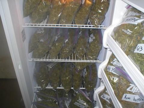 אחסון קנאביס במקרר עם לחות נמוכה