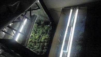 Photo of 443 שתילים נתפסו בבית בישוב מטה יהודה