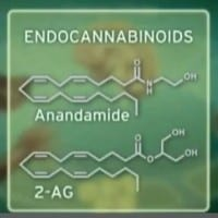 Endocannabinoid - AG-2 Anandamide