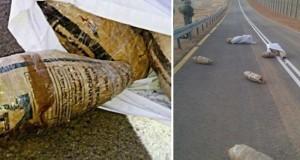 חבילות המריחואנה שהושלכו מעבר לגדר הגבול