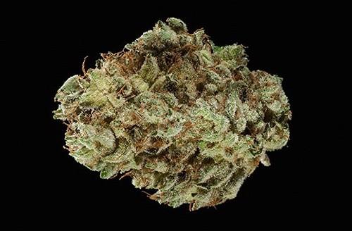 זן ההייבריד הטוב ביותר - Gorilla Glue #4