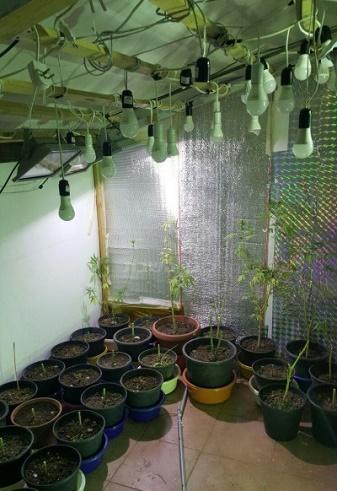 עציצים ומנורות שנתפסו בדירה בבית שמש