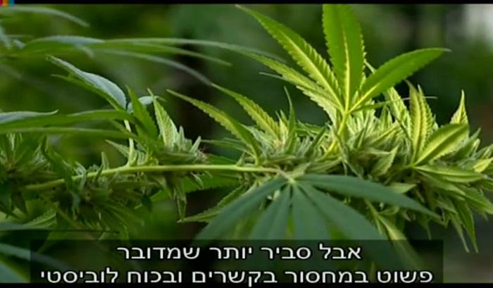 ייצוא קנאביס רפואי מישראל