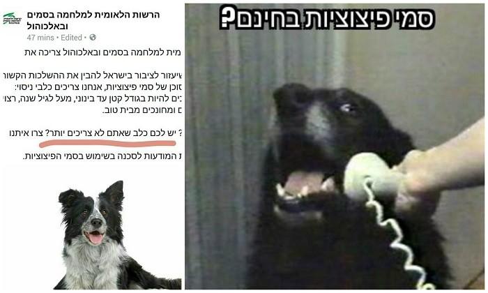 הכלב של הרשות למלחמה בסמים