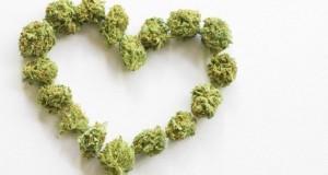 פרחי קנאביס בצורת לב