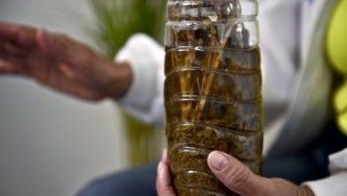 Photo of 'תרופת הקסם של סבתא': סוד הקנאביס של מקסיקו