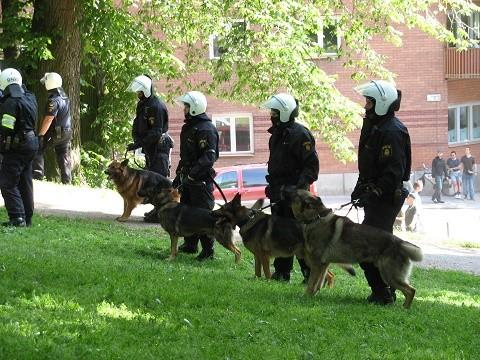 כלבי משטרה בזמן פשיטה