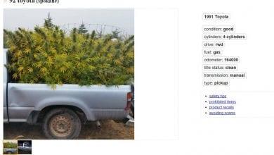 תמונה ממודעה באתר 'קרייגסליסט' - למכירה: טנדר מלא קנאביס