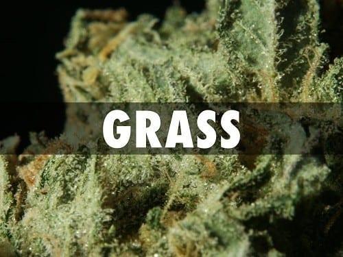 Namen van cannabis: gras