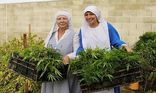 'האחיות מהעמק' צמד נזירות מקליפורניה מגדלות קנאביס רפואי