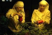 Photo of נזירות מגדלות קנאביס רפואי בקליפורניה