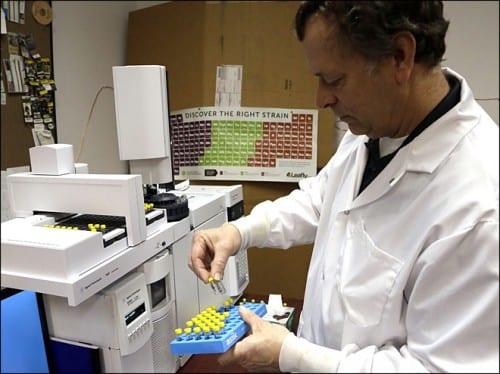 חוקר במעבדה בוחן מבחנות עם חלקי צמח הקנאביס