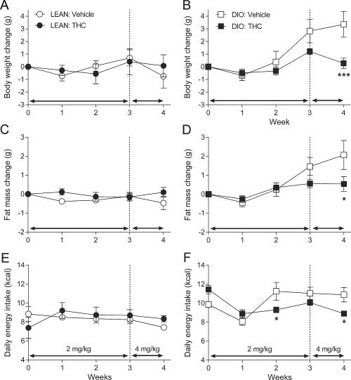 תוצאות מחקר חדש: THC מסייע לפירוק מסת שומן ומונע עלייה במשקל