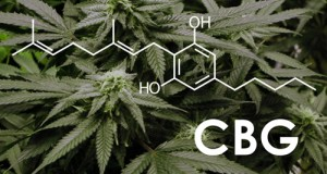 The chemical structure of the cannabinoid CBD against the background of cannabis leaves