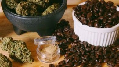 פולי קפה ופרחי קנאביס