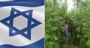 גידול המפ ישראל