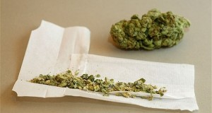 Cannabis Flower and Joint (Rolled Cannabis Cigarette)