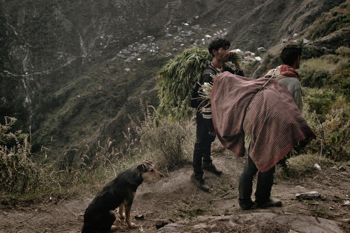 כפר בהימלאיה שמאוכלס בחקלאי קנאביס