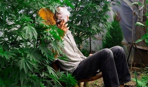 איש מעשן ג'וינט על רקע צמחי קנאביס רפואי