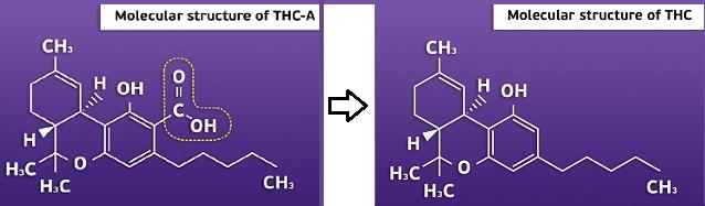 תהליך דה קרבוקסילציה - פירוק חומצות קנבינואידיות, לקנבינואידים פעילים - הכנת הקנאביס הטרי לצריכה יעילה