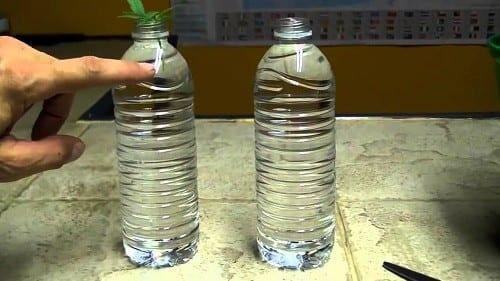 """טכניקות בסיסיות ללקיחת ייחורים - 'שיטת הבקבוק"""""""
