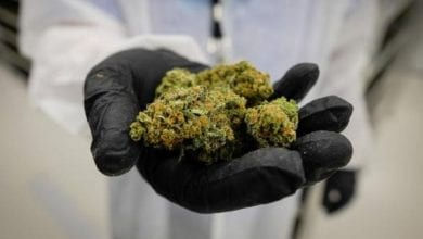 A doctor holds medical cannabis