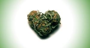 פרח קנאביס בצורת לב