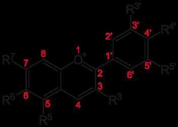 אנתוציאנין - מקור הצבע הסגול של פרחי הקנאביס (במקור צבע אדום, נצבע לסגול בשל הצמח)