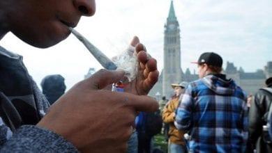 קנדה, צעירים מעשנים קנאביס (נתונים: שימוש צעירים בשפל של 12 שנים)