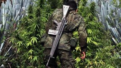 """Photo of הלגליזציה בארה""""ב שברה את קרטלי הסמים במקסיקו"""