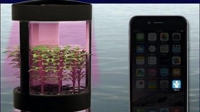Photo of 'איידרו' – ארון אוטומטי לגידול הידרו דרך אפליקציה