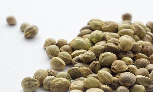 זרעי קנאביס אוטומטיים – רקע