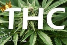 Photo of מה זה THC – המולקולה המפורסמת של קנאביס